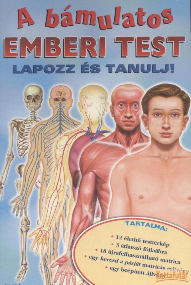 A bámulatos emberi test
